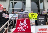 Le 3 février, des sympathisants ont manifesté leur soutien aux onze personnes soupçonnées de s'être introduites par effraction à la Ferme Porgreg en décembre. Photo : Josianne Desjardins