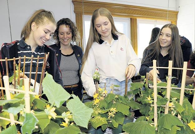 Sous le regard d'Émélie Lapierre (2e sur la photo), trois étudiantes du Collège Sainte-Anne participent au projet de culture de plants en serre. Photo : Gagnon