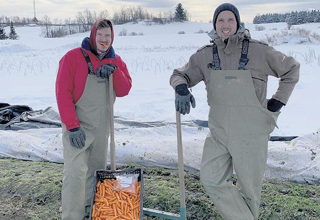 Antoine Doyon (à droite) et son employé Dave Proulx travaillent à la récolte de carottes bonbons à l'extérieur, en plein hiver. Photo : Gracieuseté d'Ölistik