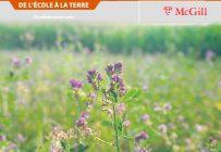 La luzerne est la légumineuse fourragère la plus cultivée au Québec, surtout pour l'ensilage. Photo : Shutterstock