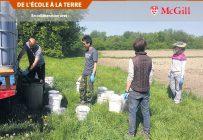 Traitement des parcelles expérimentales avec le lisier avant de semer le maïs. Le champ est au Emile A. Lods Agronomy Research Centre du Campus Macdonald, à Sainte-Anne-de-Bellevue. Photo : Naseer Hussain