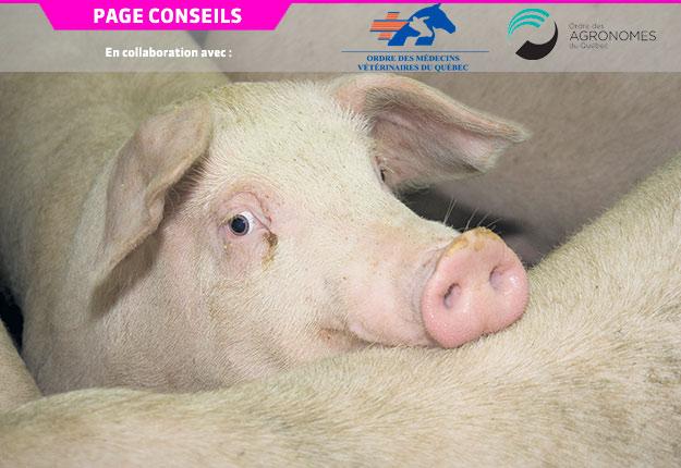 Une étude a détecté la présence du gène responsable de la résistance à la colistine dans un élevage qui n'en utilise pas. Photo : Archives/TCN