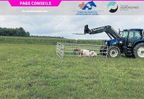Un exemple presque parfait d'une vache à terre à la Ferme Roussette. Il ne manque qu'un abri contre le soleil. Photo : Dre Élizabeth Fortin-Grégoire