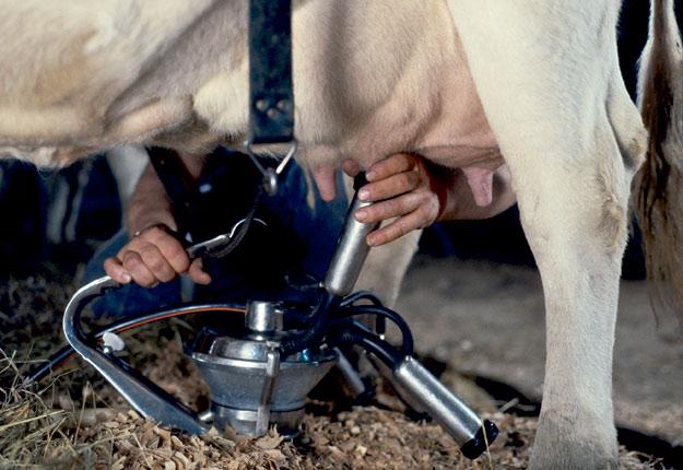 « N'allez pas traire vos vaches si vous faites de la fièvre ou si vous présentez tout autre symptôme de la COVID-19 », prévient Yohan Dallaire Boily, responsable des communications du MAPAQ. Crédit photo : Archives/TCN