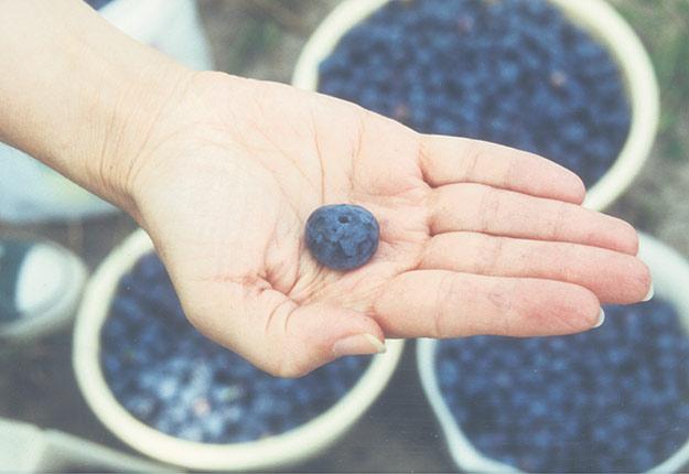 Des producteurs maraîchers et de petits fruits, notamment de bleuets, ont déjà manifesté leur envie de devenir «fermiers de garderies». Photo : Archives / TCN