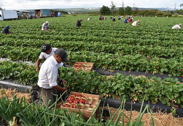 Ottawa a finalement confirmé que « les étudiants internationaux, les travailleurs sous visa et les travailleurs étrangers temporaires pourront (…) entrer au Canada, à la condition de respecter la demande du gouvernement de s'isoler pendant 14 jours ». Crédit photo : Archives/TCN