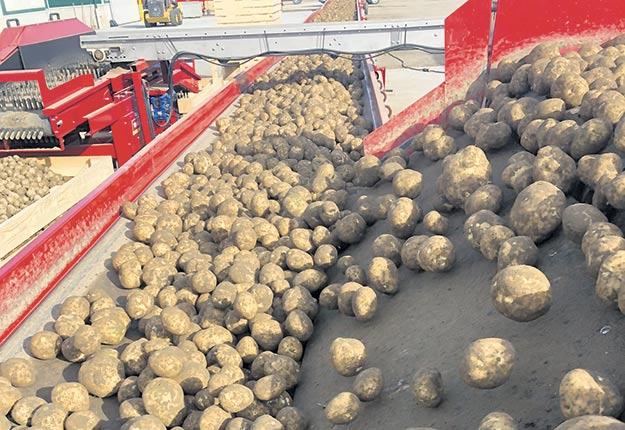 Ces dernières années, les producteurs de pommes de terre ont dû affronter des conditions défavorables à la culture du tubercule.