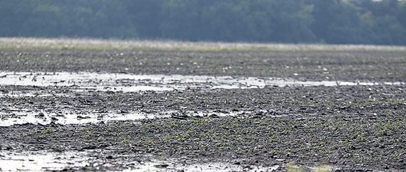 Ce printemps, les producteurs devront observer l'infiltration de l'eau et attendre que la terre soit bien sèche avant d'y faire des travaux.