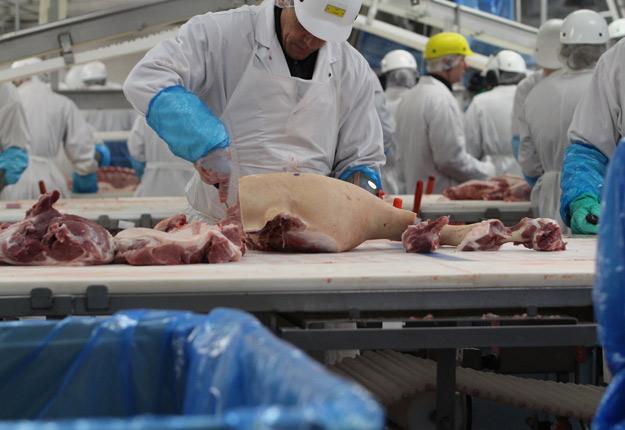 Au lendemain de l'annonce de la fermeture temporaire de l'abattoir d'Olymel à Yamachiche, voilà que les éleveurs de porcs apprennent que l'usine de Saint-Esprit recevra seulement la moitié des porcs habituels. Crédit : Myriam Laplante El Haïli/Archives TCN