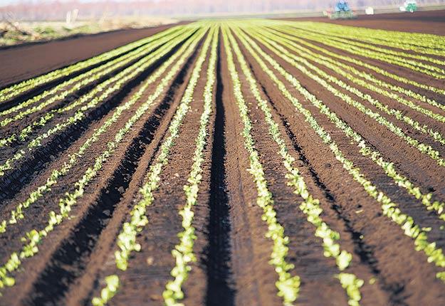 Avant d'investir dans un biostimulant quelconque, le producteur devrait se demander à quel point sa production est stable et satisfaisante d'une année à l'autre. Photo : Archives/TCN