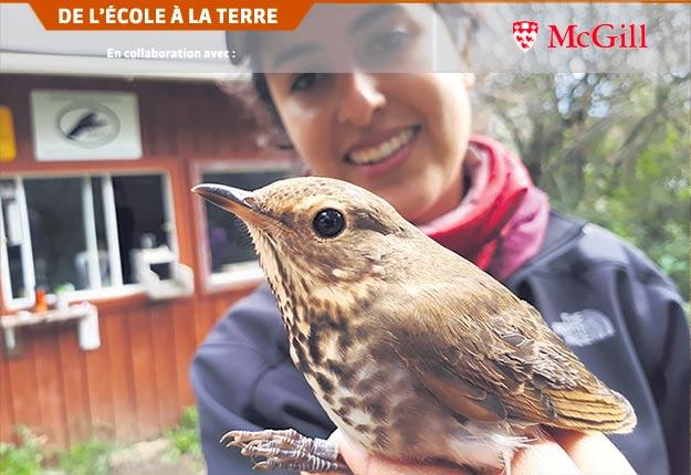 Ana Morales, étudiante de maîtrise, avec une grive à dos olive à l'observatoire des oiseaux de Université McGill. Photo : Université McGill