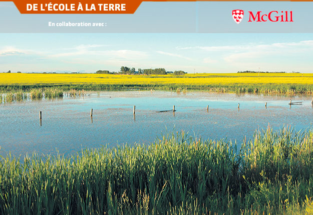 La prévision hydrologique peut aider les agriculteurs à mieux réagir aux fluctuations dans la disponibilité de l'eau. Photo : Université McGill