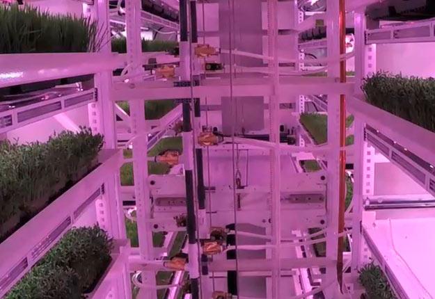 Inno-3B crée des plateformes d'agriculture verticale. Photo : Gracieuseté