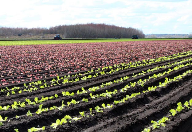 « Les agriculteurs doivent avoir confiance, financièrement parlant, qu'ils ne risquent pas de faire faillite à cause des impacts de la COVID-19 », a affirmé la présidente de la FCA, Mary Robinson. Photo : Archives / TCN