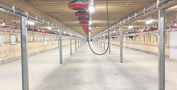 Intérieur d'un poulailler dernier cri, de 2020, juste avant sa mise en fonctionnement. Gracieuseté Consultants Lemay & Choinière