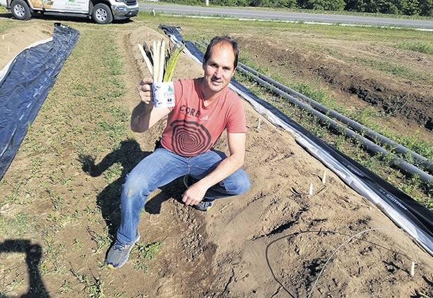 « Dans le contexte actuel, si je réussis à récolter 75000 lb d'asperges, ce sera beau », anticipe Mario Rondeau dont la production annuelle s'élève normalement à 200000 lb de légumes. Photo : Gracieuseté de Mario Rondeau