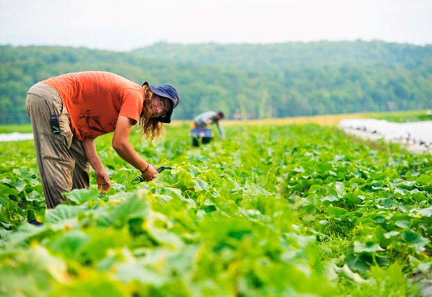 Québec offrira 200 $ de plus par semaine aux Québécois qui prêteront main-forte aux agriculteurs au cours des prochains mois. Crédit photo : Archives/TCN