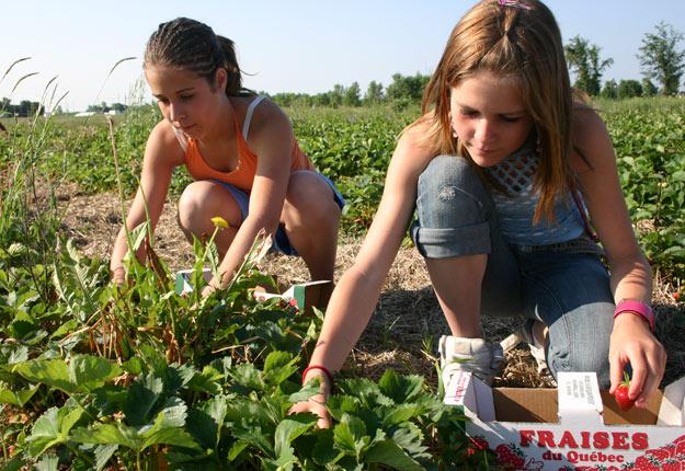 L'Association de l'Agrotourisme et du Tourisme Gourmand veut que Québec permette la reprise des activités d'autocueillette pour tout le monde, y compris les enfants. Photo: Archives / TCN