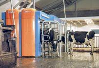 Avec deux stalles installées côte à côte, le MR-D2 peut traire deux vaches à la fois. Photo : Gracieuseté de BouMatic
