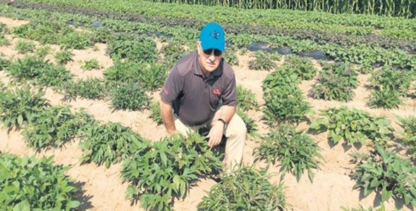 Le Dr Carlos Martin estime que le développement de nouvelles variétés de patates douces pouvant être cultivées hors de leurs zones actuelles offrira des occasions d'affaires intéressantes aux agriculteurs québécois.