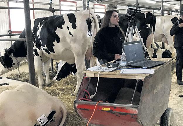 Une caméra filme les vaches dans l'étable pendant que l'encanteur décrit les animaux. Photos : Gracieuseté de Luc Breton
