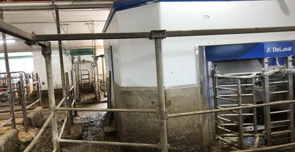 À partir du corridor de sortie du robot, Dany Poulin peut contrôler l'accès au pâturage selon les heures préétablies et les besoins de chaque vache.