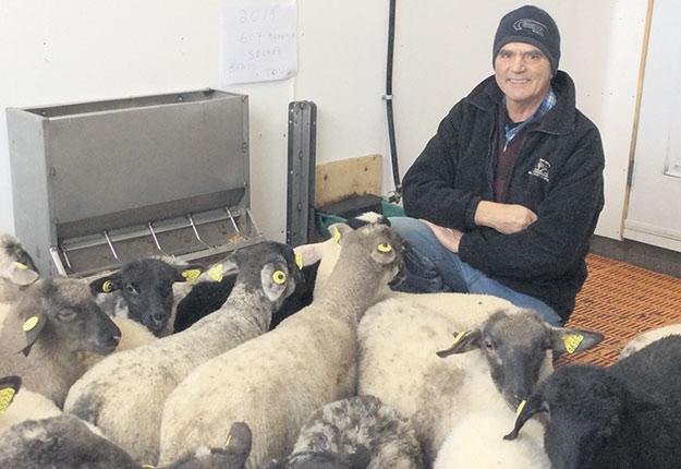 Marie-Antoine Roy et les autres producteurs ovins recevront 10,50 $ du kilo de carcasse pour leurs agneaux lourds jusqu'à la fin de l'année. Photo : Gracieuseté de Marie-Antoine Roy