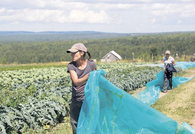 L'agriculture soutenue par la communauté permet d'avoir accès à des légumes frais et variés à un prix déterminé d'avance. Photos : Gracieuseté Ordre national du mérite agricole