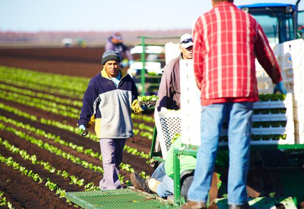 Les travailleurs qui ont reçu une nouvelle offre d'emploi pourront désormais recommencer à travailler, même si le processus de demande de permis n'est pas terminé. Photo : Archives/TCN