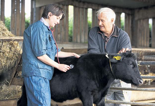 En 2019, la vérificatrice générale du Québec a blâmé le MAPAQ dans un rapport pour son inaction dans la lutte à l'antibiorésistance chez les animaux liés à l'alimentation humaine. Photo : Shutterstock