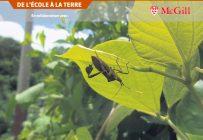 Les relations entre les insectes dans un champ peuvent influencer le rendement d'une culture. Photo : Gracieuseté de Julien Malard