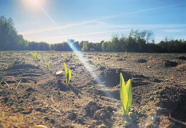 Les producteurs de maïs grains et de maïs sucré comme Johannie Maynard, ont accueilli à bras ouvert l'arrivée de la chaleur permettant à leurs plants d'émerger du sol. «C'était le temps car on commençait à stresser. Mais là, la saison est partie», dit l'agricultrice de Saint-Paul-d'Abbotsford, en Montérégie. Photo : Johannie Maynard