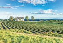 Le Compte d'urgence pour les entreprises canadiennes s'adresse à celles dont la masse salariale se situe entre 20000 $ et 1,5 M$. Photo : Shutterstock