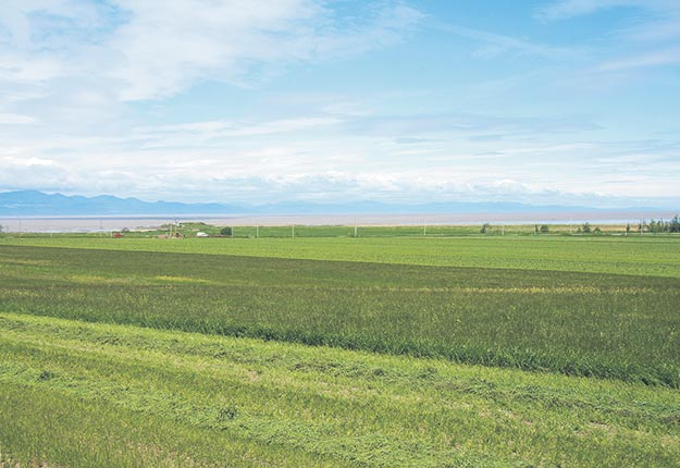 En plus d'améliorer la santé des sols, la culture de plantes fourragères permet de donner un coup de pouce à la planète en stockant le carbone dans le sol. Photo : Archives/TCN