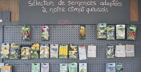 Si on utilise des semences, il est nécessaire que celles-ci soient adaptées au climat du Québec.