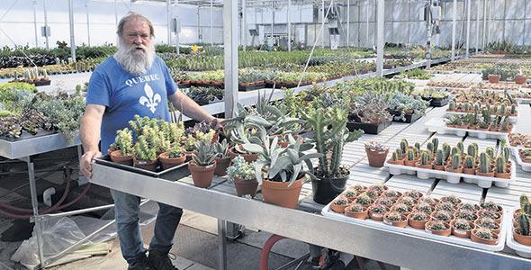 Le propriétaire du Cactus fleuri, André Mousseau, tire plusieurs avantages de ses tables inondables pour irriguer ses plantes ornementales. L'employée chargée de l'arrosage met une heure à effectuer des opérations qui autrefois demandaient une journée complète.