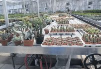L'irrigation par voie racinaire est plus appropriée pour plusieurs espèces de plantes comme les succulentes, qui poussent à l'état sauvage dans des climats arides et dont le feuillage est très sensible au contact de l'eau. Photos : David Riendeau / TCN