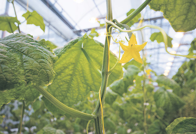 Des serres d'horticulture ornementale pourraient produire des fruits et légumes cet automne, pour compléter l'offre en épicerie. Photo : Archives / TCN