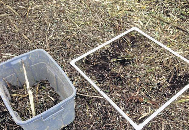 Si l'implantation de tiges de saules comme engrais vert peut améliorer la qualité des sols organiques à plusieurs niveaux, cette avenue demeure très onéreuse à appliquer.