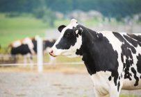 Le retour d'un équilibre entre la production et la transformation laitière permet d'ajouter une journée de production additionnelle en juin. Crédit : Martin Ménard / Archives TCN