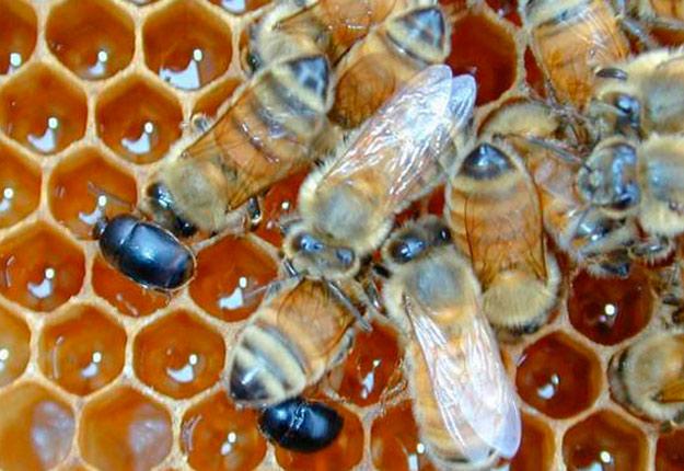 Source : Apiculteurs et apicultrices du Québec.