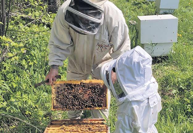 Nicolas Bélanger a perdu 145 ruches sur 600 l'an dernier, en Gaspésie. Photo : Gracieuseté de Nicolas Bélanger