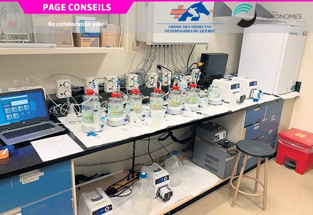 Le bioréacteur est composé de huit réacteurs alimentés par deux pompes qui simulent une alimentation constante de l'animal et deux autres pompes chargées d'évacuer les surplus. Photo : Faculté de médecine vétérinaire de l'Université de Montréal