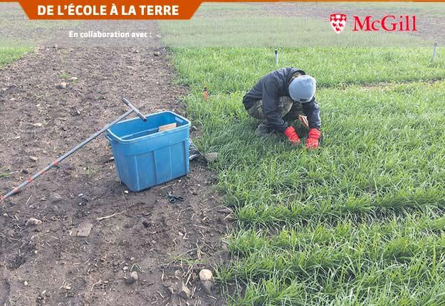 L'épandage du fumier, de même que les semences et les récoltes du couvert végétal et du blé, a été fait manuellement par Leanne Ejack et ses collègues. Photo : Hicham Benslim