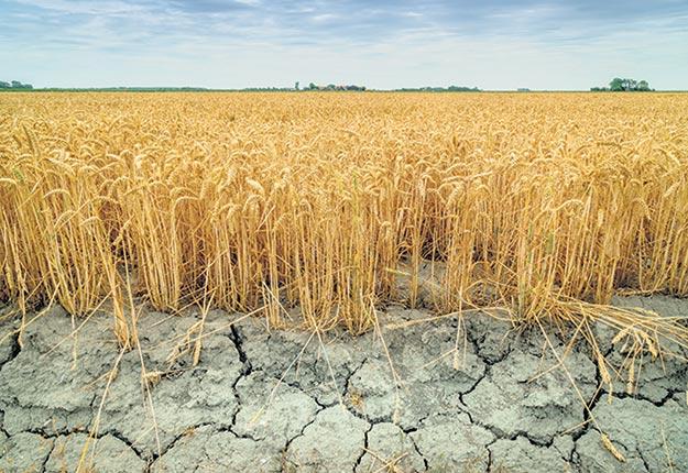 Le météorologue André Monette espère se tromper, mais il anticipe un été de sécheresse pour plusieurs régions. Photo : Shutterstock