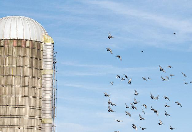 Il faut toujours se rappeler que les silos contiennent des denrées très périssables. La seule façon de le conserver en bon état est de surveiller la parfaite étanchéité de la structure.