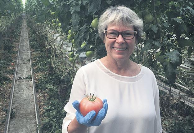 Dominique Fortier pourra encore produire la tomate rose Makari durant les trois ou quatre prochaines années. Photo : Gracieuseté de Dominique Fortier