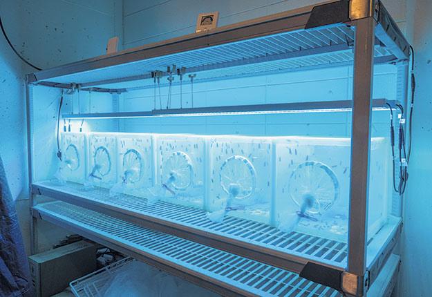 L'une des équipes de recherche de l'Université Laval travaille déjà depuis quelques années à la production de mouches soldat noires pour l'alimentation des animaux d'élevage et domestiques. Photo : Gracieuseté de l'émission La voie agricole