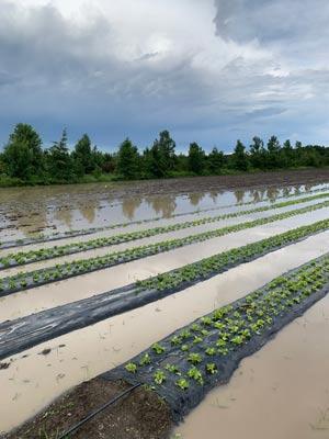 Certaines terres du producteur ont également été inondées.