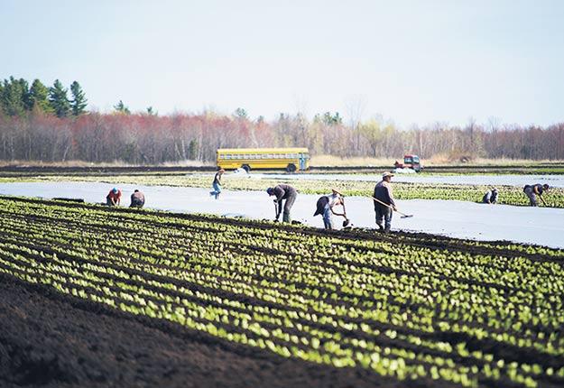 Les TET ont été testés durant la période d'isolement, avant d'intégrer les entreprises agroalimentaires ou les fermes pour lesquelles ils travaillent. Photo : Archives/TCN